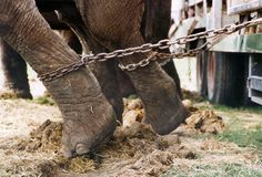 stop,please stop animal circuses !