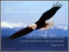 Psalm 91:4 ~ We are in the safety of Him!