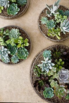 on a hunt for succulents.... i want to fill my home with them. :)