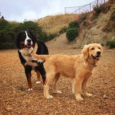 Best buds at Corona Heights Park! - San Francisco, CA - Angus Off-Leash #dogs #puppies #cutedogs #dogparks #sanfrancisco #california #angusoffleash