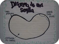 Science anchor chart...use the sheet I already have for the exploration of a lima bean seed.