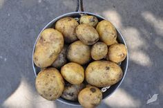 A Nest for All Seasons: Buy Potato. Grow Potato. Eat Potato. Plant. Eat Potato. Plant.