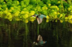 With Fish ! , Kingfisher by Mubi.A