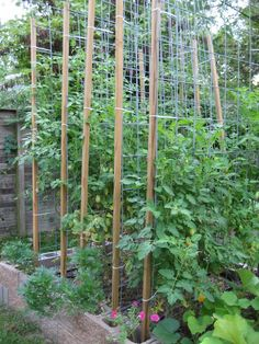 Cattle panels (cut in half at the store) zip-tied to 2x2's make super sturdy garden trellises perfectly sized for a cinderblock garden - no tools required