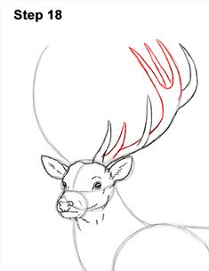 Learn how to draw a Red Deer with this how-to video and step-by-step drawing instructions. Stag Deer, Deer Art, Red Deer, Deer Drawing Easy, Antler Drawing, Doodle Drawings, Easy Drawings, Drawing Sketches, Animal Paintings
