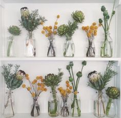 protea flower | Tumblr