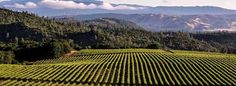 The drop in restaurant sales for small US wineries over the last two years is dramatic. In 2014, wineries producing between 2500 and 10,000 cases per year sold more than 30 percent of their wine in restaurants. Last year, that number was down to 15 percent.  Meanwhile, wineries producing more than 250,000 cases per year held steady, with about 25 percent of their sales continuing to come in restaurants.
