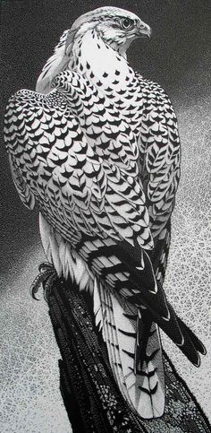 Gyr Falcon ~ Wood Engraving ~ Colin See-Paynton ~ The Wildlife Art Gallery                                                                                                                                                                                 More