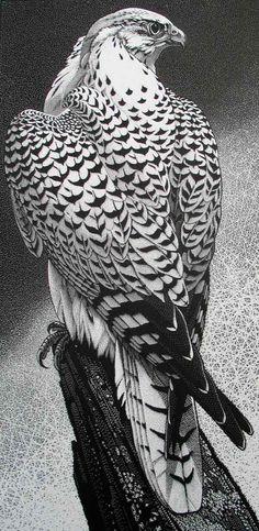 Colin See-Paynton - Gyr Falcon
