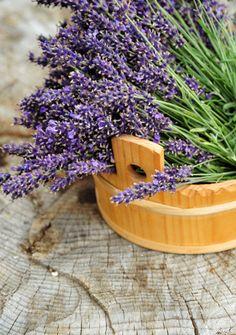 #Lavanda - per le #coliche, massaggiare 1 o 2 gocce di olio essenziale sull'addome