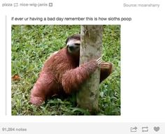 And this is what sloths look like when they poop. | 19 Tumblr Posts That Will Make You Feel Better About Your Day