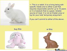 Rabbits can either be owned as pets (like my Holland Lops) or they can be considered livestock as a meat source (Cali's, NZ, ect). If you can not  handle owning a rabbit for either of these purposes, just buy your kid a stuffed bunny toy or a chocolate bar in the shape of a rabbit.