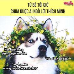 Funny Blogs, Funny Memes, Haha, Anime, Quotes, Quotations, Ha Ha, Cartoon Movies, Anime Music
