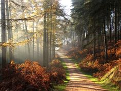 Misty morning in Abraham's valley, Cannock Chase, Staffordshire A picture of: Cannock Chase Country Park, Cannock, Staffordshire
