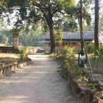 Ecolux Bagh Sarai Resort Bandhavgarh 7