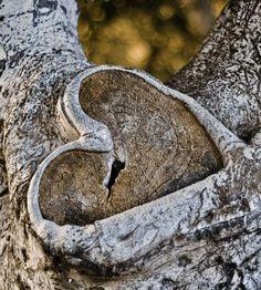 - pláčeš, že pro tebe mu srdce netluče. A co když ..... Zůstalo srdce vyryté v kůře stromu ...