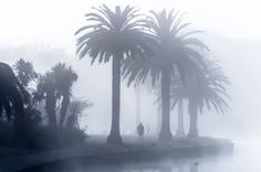 Early this morning at Lake Rotoroa .Hamilton,New Zealand. I really missed these winter conditions and this one morning will keep me going till winter arrives once more . Hamilton New Zealand, Foggy Morning, Seattle Skyline, Palm Trees, Street Photography, Plants, Travel, 3d, Winter