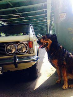 Wunderschöner Hund und Auto :)