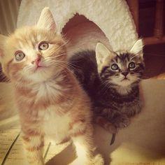 Gorgeous #kittens