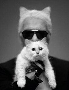 Karl Lagerfeld é o gatinho da vez....