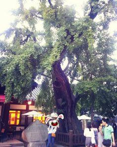 """[전주] 600년된 은행나무 :: 이거 찾는다고 열심히 걷고 있는뎈ㅋㅋㅋㅋㅋㅋ걷다걷다 없자 """"대체 은행나무가 어딨는거야!"""" 이랬는데 옆에 서있던 아주머니가 """"저기있는데..""""라며 고개를 돌리니 """"뙇!!!!!"""" 감쪽같아라ㅎㅎ(나무 옆 설빙있는건 보았는데..왜 나무는^^; 그냥 가로수인줄.....) 똑띠보니까 멋있었다!"""