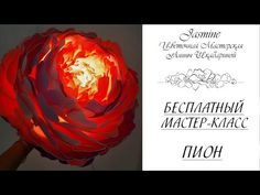 Алина Шкабарина - YouTube Cabbage, Youtube, Giant Flowers, Cabbages, Collard Greens, Youtubers, Youtube Movies