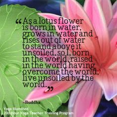 1155 best lotus flower water lily flower images on pinterest as a lotus flower is born in water grows in water and rises out mightylinksfo