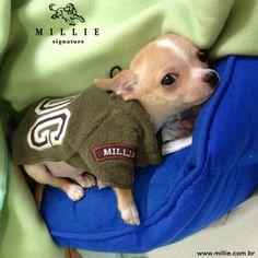 Samuel preparado para o frio, com MILLIE SOFT AMÉRICA + CAMA ESTRELA + Cobertor Seu Pet merece: www.millie.com.br