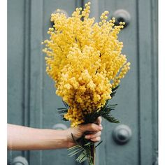 Just look at these colours. Absolutely gorgeous. Have no name for the photographer I'm afraid. #yellow #farrowandball #flowers #colours #onemustdash