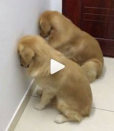 Cute Funny Dogs, Funny Cats And Dogs, Cute Dogs And Puppies, Cute Cats And Kittens, Cute Funny Animals, Funny Babies, Cute Baby Animals, Kittens Cutest, Animals And Pets