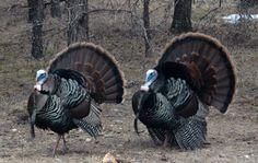 northern michigan bird images - Google Search