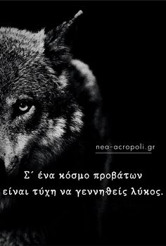 Wolf Quotes, Greek Quotes, Good Morning, Wisdom, Study, Nice, Words, Quotes, Buen Dia