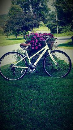 Biking in the Berkshires!  Village Bike Rental in Adams, Ma has fantastic bikes and is on the Ashuwillticook Rail Trail. So fun!!