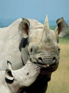 Mother rhino killed so some jack off midget in China can think it's horn helps give him a better boner!