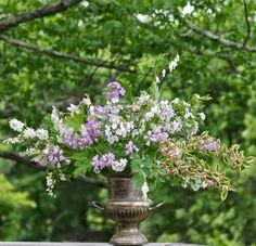 fairest flowers farm: hesperis matronalis