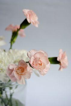 rosadas