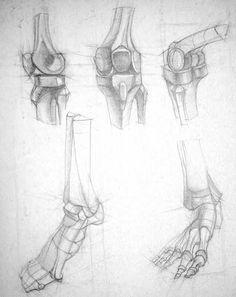 африканский слон анатомия - Поиск в Google