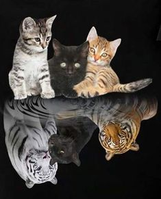 Baby Animals Super Cute, Cute Little Animals, Cute Funny Animals, Lion King Animals, Majestic Animals, Baby Animals Pictures, Cute Animal Pictures, Cute Cats And Kittens, Kittens Cutest