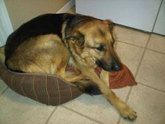 #LOSTDOG 4-14-14 #QUAILVALLEY #CA FEMALE BLACK & TAN #GERMANSHEPHERD 951-867-2151 https://www.facebook.com/permalink.php?story_fbid=10152053610697076&id=88101112075