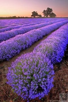 #Provence Bucket List ... → #Travel #National