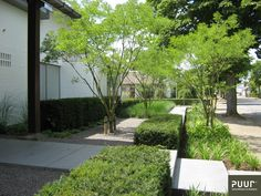 Asian Landscape, Landscape Design, Front Gardens, Garden Images, Garden Architecture, Love Garden, Contemporary Garden, Plantation, Small Trees