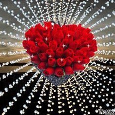 Nasserq Love GIF Nasserq Love Flowers Discover & Share GIFs is part of Love gif - Beautiful Love Pictures, Beautiful Gif, Love Images, Beautiful Flowers Wallpapers, Beautiful Rose Flowers, Love Flowers, Roses Gif, Flowers Gif, Happy Birthday Images