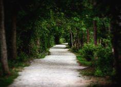 Shady trail
