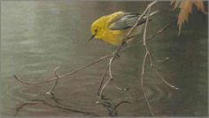 Robert Bateman - Prothonotary Warbler