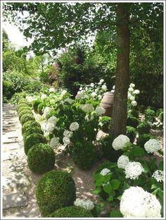 White hydrangeas & boxwood, Les Jardins Agapanthe