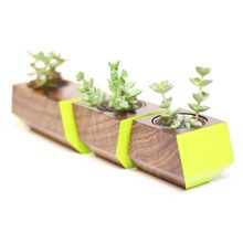 Boxcar Planter - Walnut and Lime