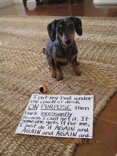 ~ via Everyone Loves a Dachshund So True! Gotta love a Dachshund Dachshund Funny, Dachshund Love, Funny Dogs, Funny Animals, Cute Animals, Daschund, Dachshund Puppies, Dachshund Quotes, Dachshund Rescue