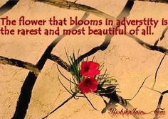 The Flower That Blooms In Adverstity