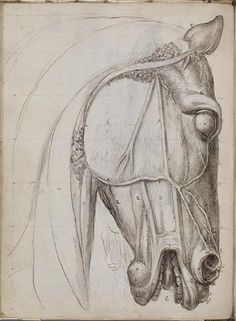 Study of the Anatomy of the Portuguese Horse by Machado de Castro, late 1800s