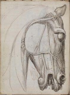 Study of the Anatomy of the Portuguese Horse by Machado de Castro, late 1800s